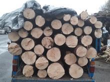 هرس قطع درخت چوب بری سمپاشی خرید چوب باغبان در شیپور