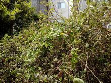 علفتراشی زمین با دستگاه  در شیپور