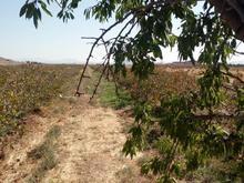 فروش زمین کشاورزی 3000 متر در مامونیه در شیپور