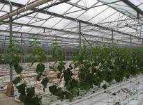 تولید و عرضه انواع قلاب نخ گلخانه در شیپور-عکس کوچک