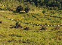زمین کشاورزی 400 متر در تنکابن در شیپور-عکس کوچک