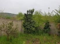 فروش زمین مسکونی 300 متر در قادی کلا رجه در شیپور-عکس کوچک