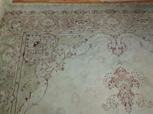 فرش پاتریس در شیپور