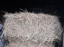 کاه برنج خشک و سفید در شیپور-عکس کوچک