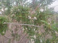 فروش باغ درآبیک قشلاق در شیپور-عکس کوچک
