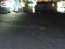 بیل مکانیکی جهت اجاره در شیپور