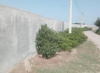 زمین 337 متری در کلاگرمحله جاده شهید صالحی در شیپور-عکس کوچک