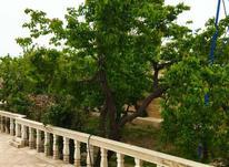باغ 1498 متری با شرایط بینظیر وعالی برای سرمایه گذاری در شیپور-عکس کوچک