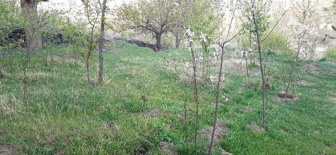 باغ دره مرادبیک و سیلوار متری  در گروه خرید و فروش املاک در همدان در شیپور-عکس4