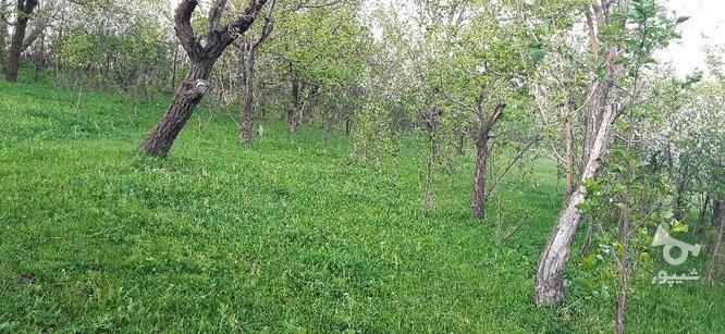 باغ دره مرادبیک و سیلوار متری  در گروه خرید و فروش املاک در همدان در شیپور-عکس5