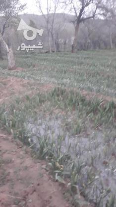باغ با چشم انداز عالی واقع در روستای سولان در گروه خرید و فروش املاک در همدان در شیپور-عکس2