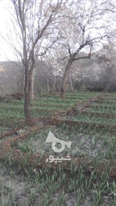 باغ با چشم انداز عالی واقع در روستای سولان در گروه خرید و فروش املاک در همدان در شیپور-عکس4