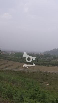 زمین کشاورزی خارج بافت  در گروه خرید و فروش املاک در مازندران در شیپور-عکس4