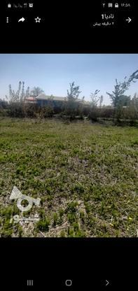 فروش زمین باغی  در گروه خرید و فروش املاک در گیلان در شیپور-عکس1