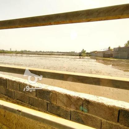 ویلا 230متر منطقی توریستی خط دریا در گروه خرید و فروش املاک در مازندران در شیپور-عکس13