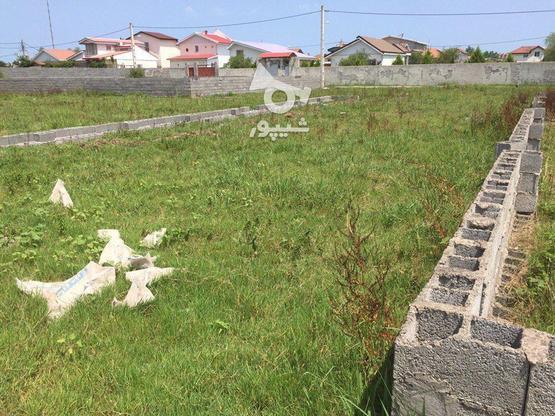 زیباکنار زمین 242متری با مدارک آماده انتقال در گروه خرید و فروش املاک در گیلان در شیپور-عکس2