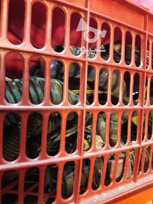 دسته سیم سمند در گروه خرید و فروش وسایل نقلیه در اصفهان در شیپور-عکس1