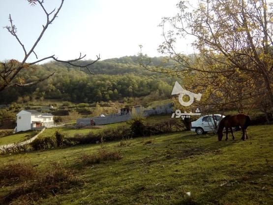 فروش زمین 235 متری صاف در روستای تیار چلاو در گروه خرید و فروش املاک در مازندران در شیپور-عکس3