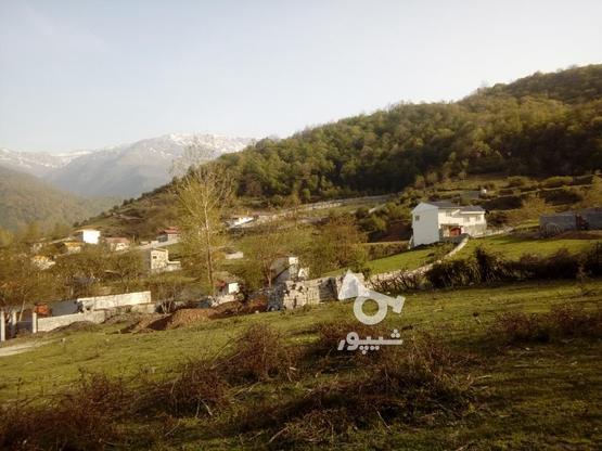 فروش زمین 235 متری صاف در روستای تیار چلاو در گروه خرید و فروش املاک در مازندران در شیپور-عکس4