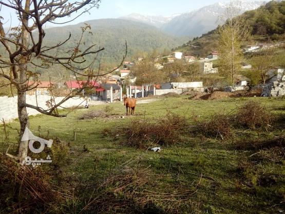 فروش زمین 235 متری صاف در روستای تیار چلاو در گروه خرید و فروش املاک در مازندران در شیپور-عکس1