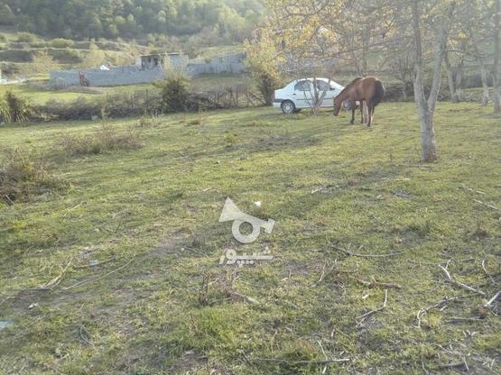 فروش زمین 235 متری صاف در روستای تیار چلاو در گروه خرید و فروش املاک در مازندران در شیپور-عکس2