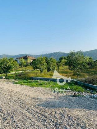 فروش فوری 19قطعه زمین تنکابن در گروه خرید و فروش املاک در مازندران در شیپور-عکس7