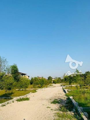 فروش فوری 19قطعه زمین تنکابن در گروه خرید و فروش املاک در مازندران در شیپور-عکس5
