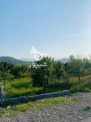 فروش فوری 19قطعه زمین تنکابن در گروه خرید و فروش املاک در مازندران در شیپور-عکس3