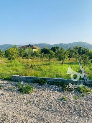 فروش فوری 19قطعه زمین تنکابن در گروه خرید و فروش املاک در مازندران در شیپور-عکس4