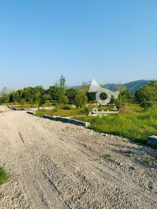 فروش فوری 19قطعه زمین تنکابن در گروه خرید و فروش املاک در مازندران در شیپور-عکس2