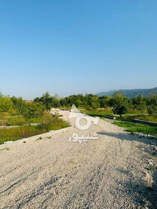 فروش فوری 19قطعه زمین تنکابن در گروه خرید و فروش املاک در مازندران در شیپور-عکس8
