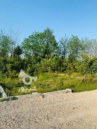 فروش فوری 19قطعه زمین تنکابن در گروه خرید و فروش املاک در مازندران در شیپور-عکس6
