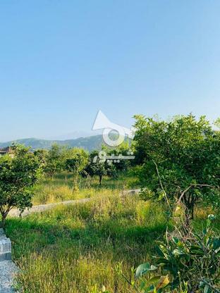 فروش فوری 19قطعه زمین تنکابن در گروه خرید و فروش املاک در مازندران در شیپور-عکس1