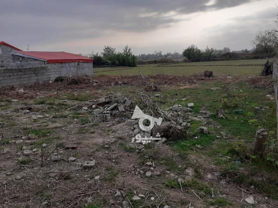 فروش زمین مسکونی با قیمت مناسب در روستای چهارده در گروه خرید و فروش املاک در گیلان در شیپور-عکس3