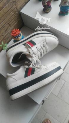 کفش شیک لژ دار در گروه خرید و فروش لوازم شخصی در مازندران در شیپور-عکس3