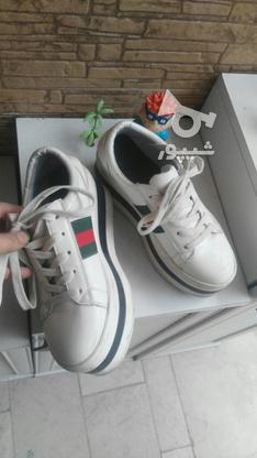 کفش شیک لژ دار در گروه خرید و فروش لوازم شخصی در مازندران در شیپور-عکس2
