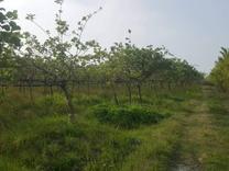 فروش زمین کشاورزی 17000 متر در تنکابن در شیپور