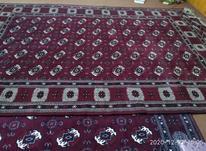 قالی ترکمنی در شیپور-عکس کوچک