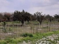 زمین کشاورزی دولت آباد 300 متر در شیپور