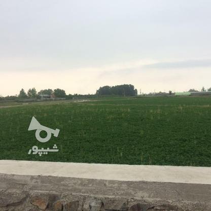 فروش زمین مسکونی 11000 متر در آمل در گروه خرید و فروش املاک در مازندران در شیپور-عکس2