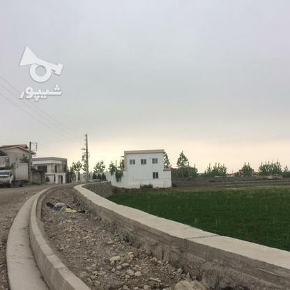 فروش زمین مسکونی 11000 متر در آمل در گروه خرید و فروش املاک در مازندران در شیپور-عکس5