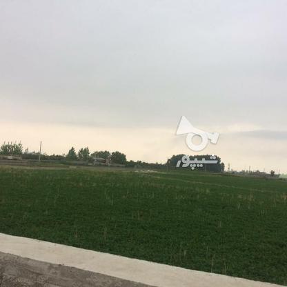 فروش زمین مسکونی 11000 متر در آمل در گروه خرید و فروش املاک در مازندران در شیپور-عکس6