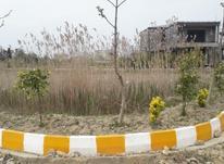 زمین 225 متری ساحلی - شهرکی  در شیپور-عکس کوچک