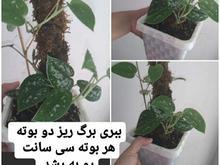 فروش گل ارزان در شیپور