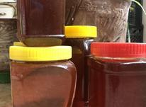 عسل  طبیعی در شیپور-عکس کوچک