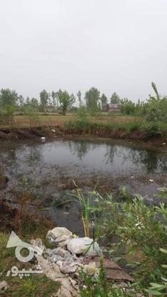 فروش زمین مسکونی 4600 متر در آستانه اشرفیه در گروه خرید و فروش املاک در گیلان در شیپور-عکس4