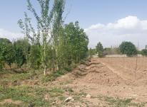 زمین کشاورزی 5000 متر  در شیپور-عکس کوچک