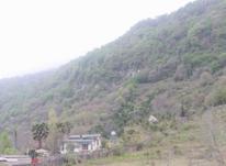 فروش زمین مسکونی 400 متر در رامسر در شیپور-عکس کوچک