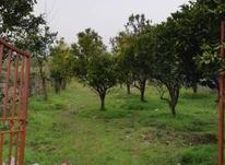 زمین مسکونی 746 متر جاده قلعه گردن در شیپور-عکس کوچک