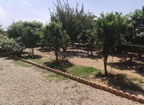 فروش زمین مسکونی 488 متر در بابلسر در شیپور-عکس کوچک